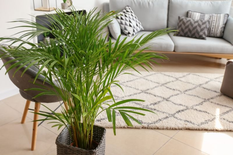 Banish the post-Christmas blues with a house plant